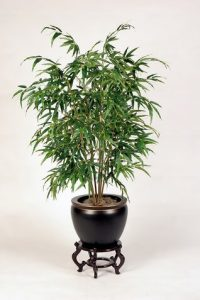 Interior Decorating: Bamboo Palm