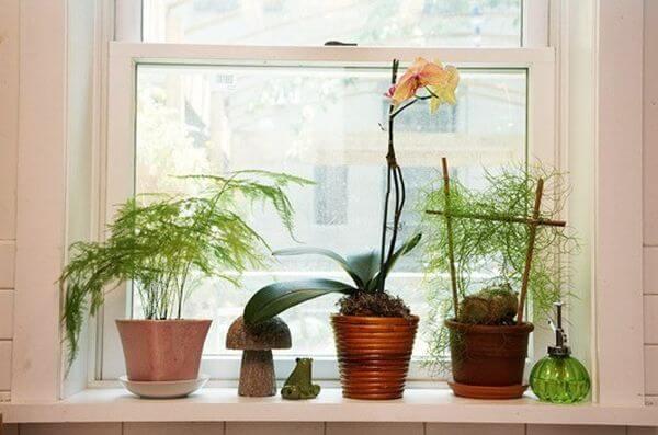 Interior Décor Ideas: Decorate Your Window Sills